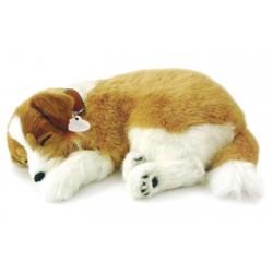 Collie(Lassie)