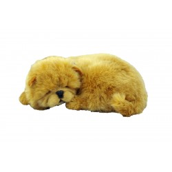 New Chow Chow